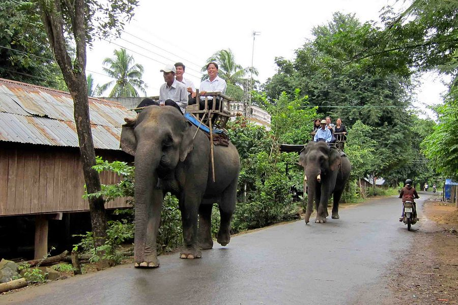 Yok Don National Park Receives Financial Grant to Stop All Elephant Rides, Activities