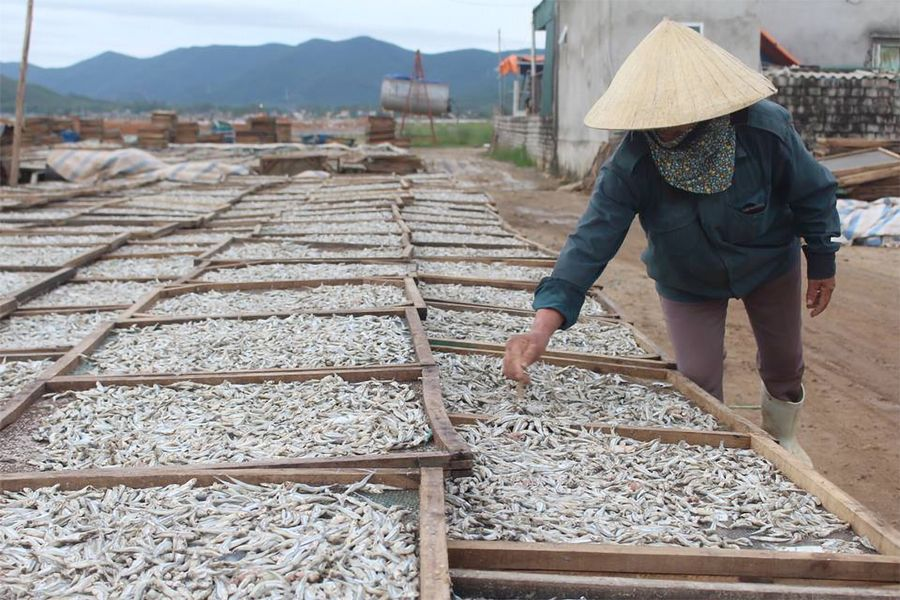 In Nghe An, Untreated Waste From Artisan Villages Worsens Local Pollution