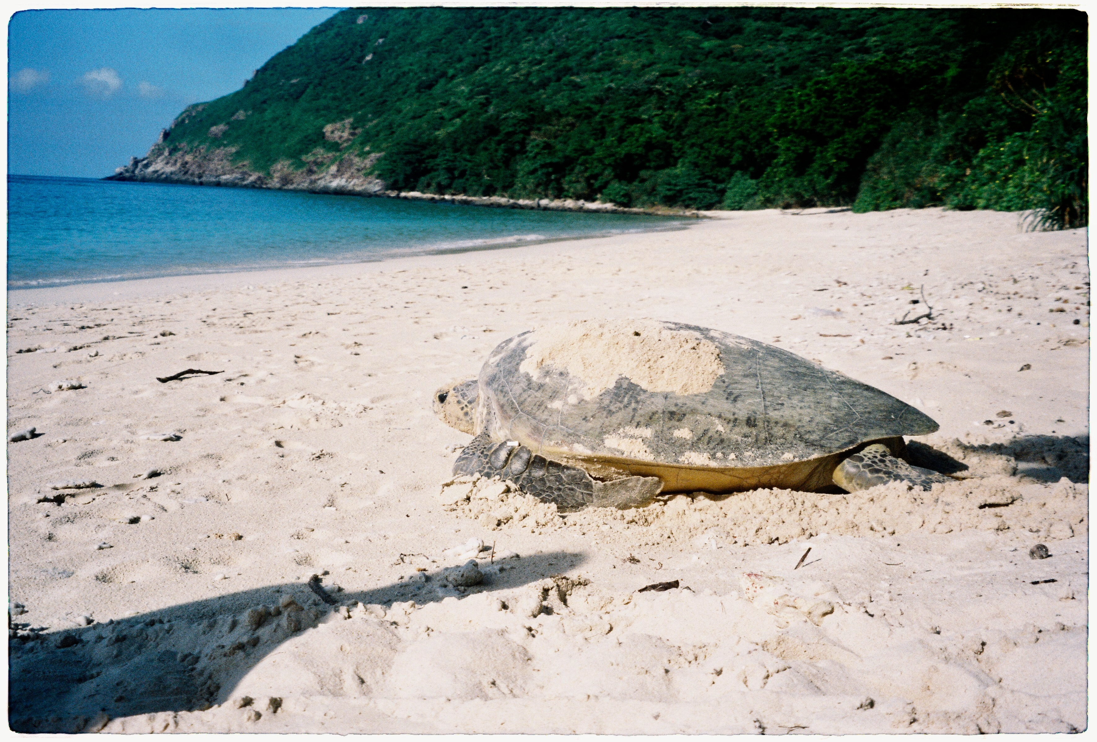 [Photos] The Childhood of Con Dao's Baby Turtles Caught on Film